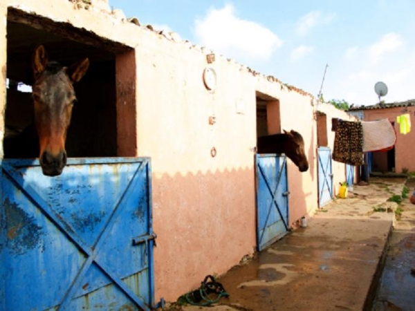 royal-club-equestre-anfa à casablanca